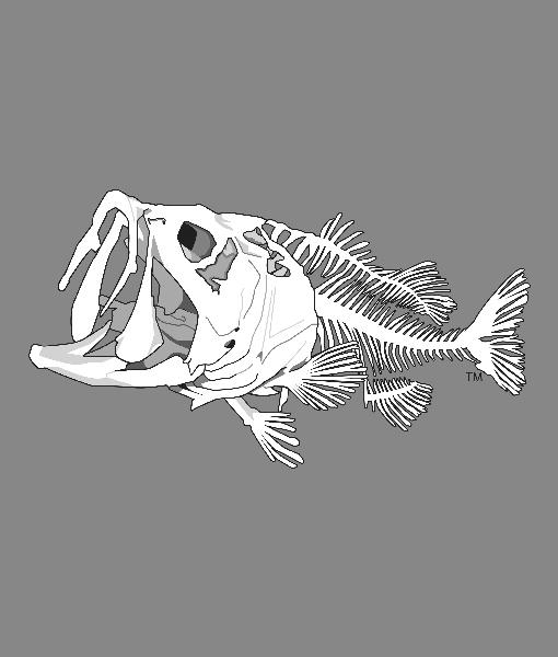 Bass Bones